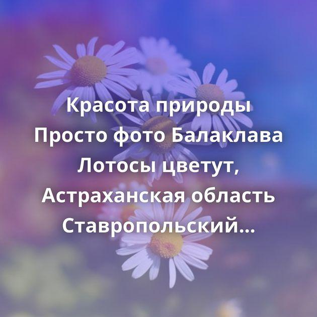 Красота природы Просто фото Балаклава Лотосы цветут, Астраханская область Ставропольский край Рязанская…