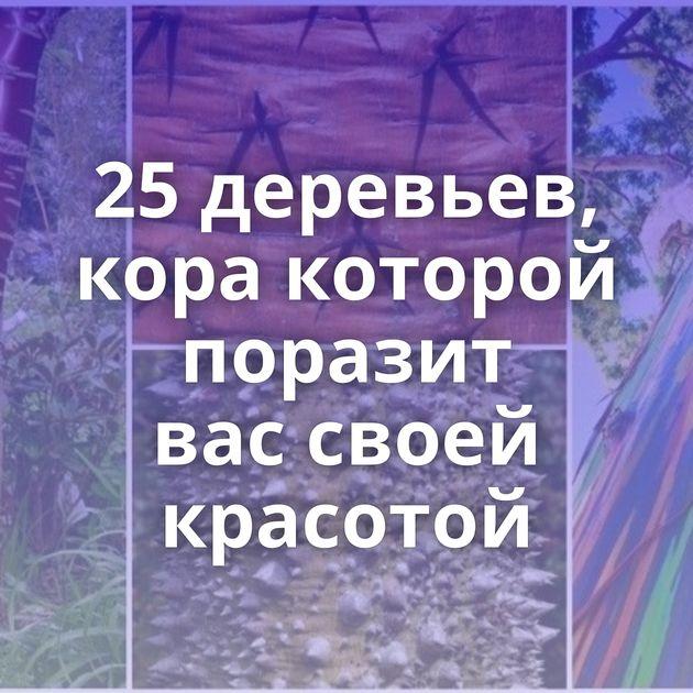 25деревьев, кора которой поразит вассвоей красотой