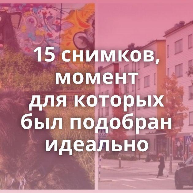15снимков, момент длякоторых былподобран идеально