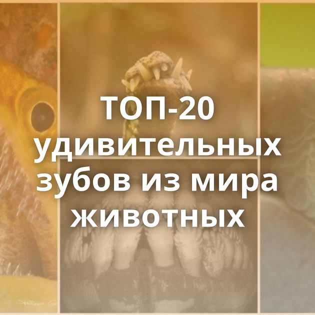 ТОП-20 удивительных зубов измира животных