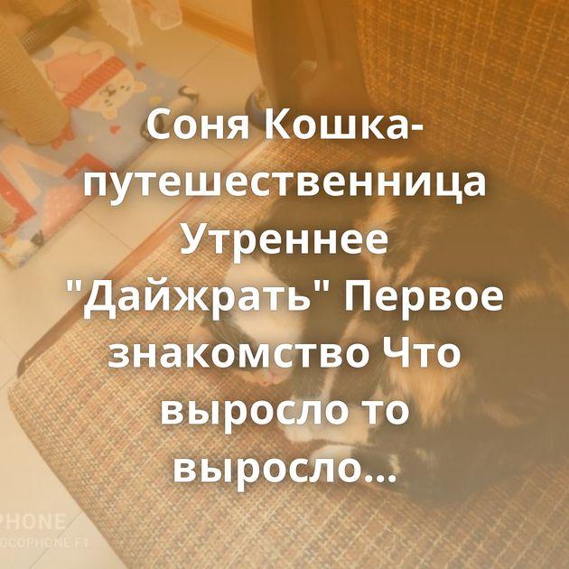 Соня Кошка-путешественница Утреннее