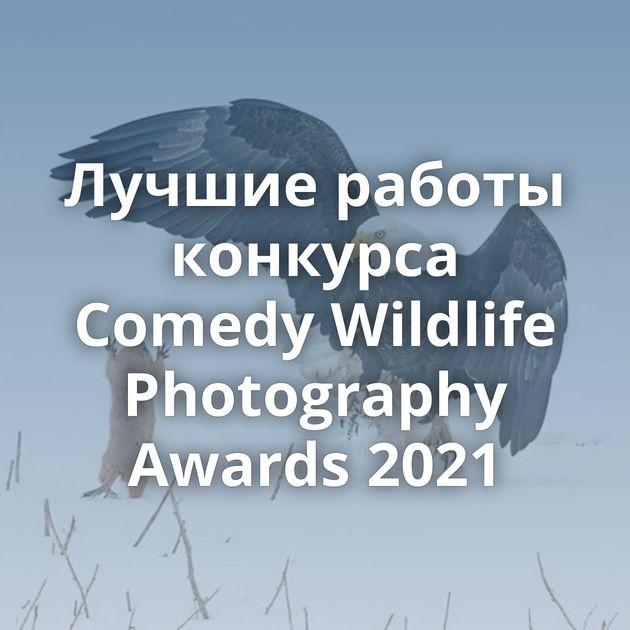 Лучшие работы конкурса Comedy Wildlife Photography Awards 2021