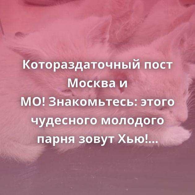 Котораздаточный пост Москва и МО!Знакомьтесь: этого чудесного молодого парня зовут Хью! Ответ на пост…