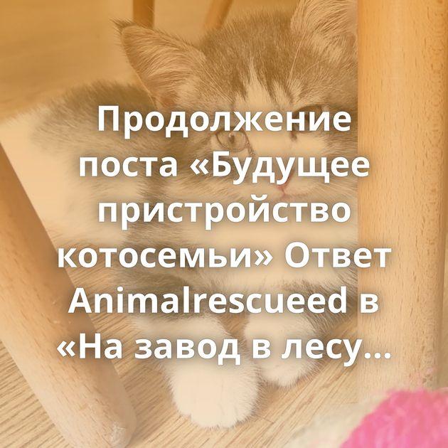 Продолжение поста «Будущее пристройство котосемьи» Ответ Animalrescueed в «На завод в лесу подкинули котят.…