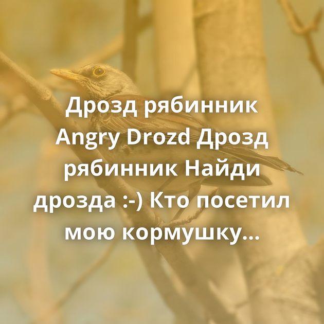 Дрозд рябинник Angry Drozd Дрозд рябинник Найди дрозда :-) Кто посетил мою кормушку Дрозд-рябинник Фотографии…