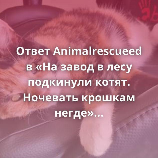 Ответ Animalrescueed в «На завод в лесу подкинули котят. Ночевать крошкам негде»Продолжение поста «Скоро сказка…