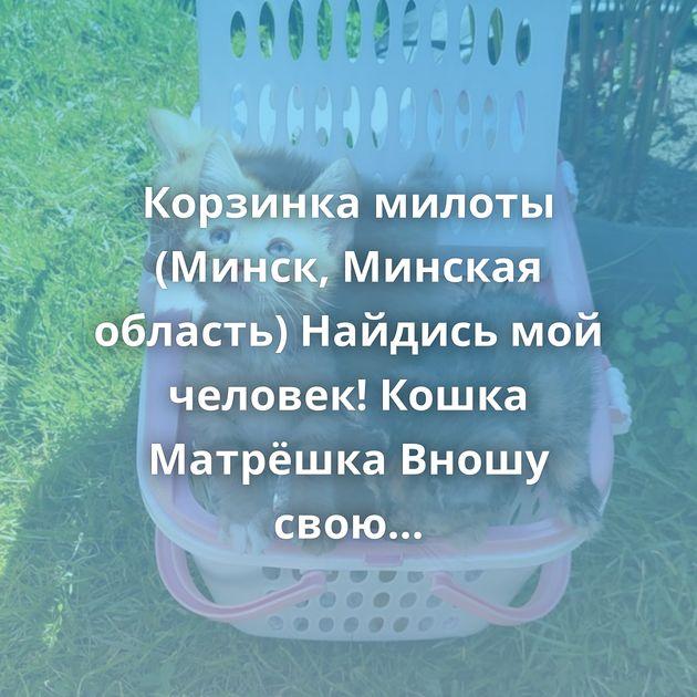 Корзинка милоты (Минск, Минская область) Найдись мой человек! Кошка Матрёшка Вношу свою лепту Москва и…