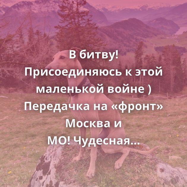 В битву! Присоединяюсь к этой маленькой войне ) Передачка на «фронт» Москва и МО!Чудесная Берта ищет семью!…
