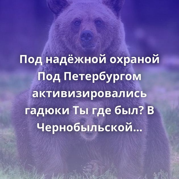 Под надёжной охраной Под Петербургом активизировались гадюки Ты где был? В Чернобыльской зоне Беларуси…