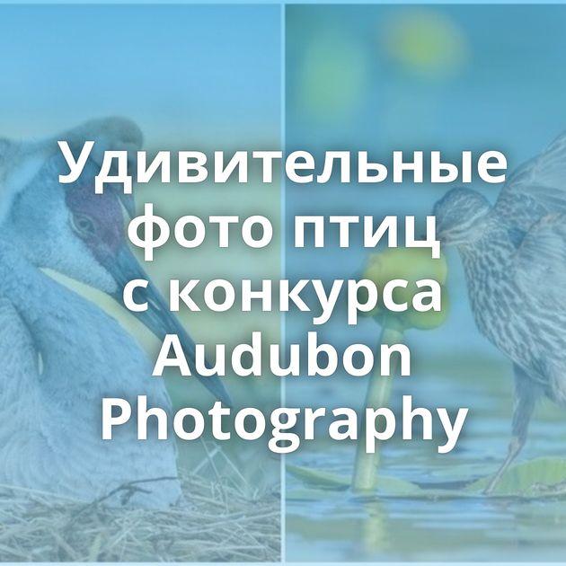 Удивительные фото птиц сконкурса Audubon Photography