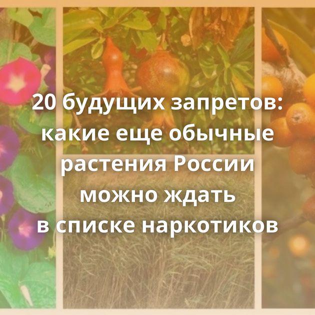 20будущих запретов: какие ещеобычные растения России можно ждать всписке наркотиков