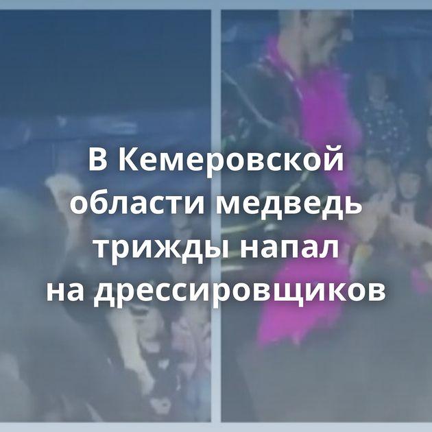 ВКемеровской области медведь трижды напал надрессировщиков