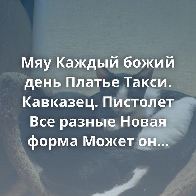 Мяу Каждый божий день Платье Такси. Кавказец. Пистолет Все разные Новая форма Может он переходящий, как…