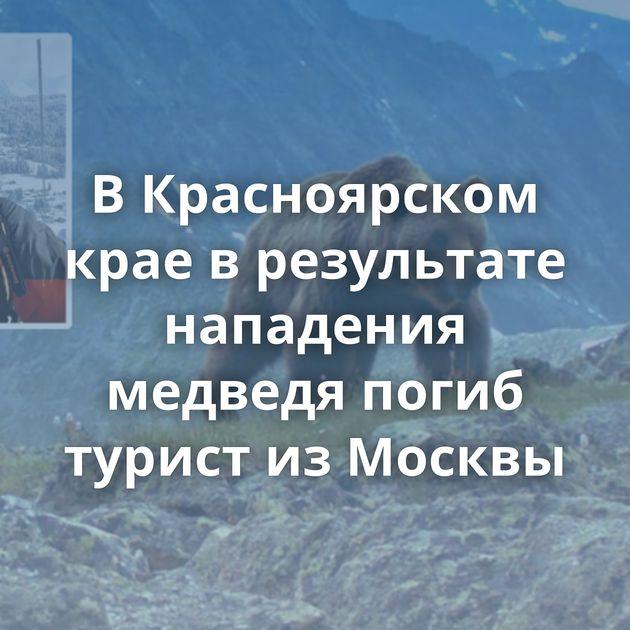 ВКрасноярском крае врезультате нападения медведя погиб турист изМосквы