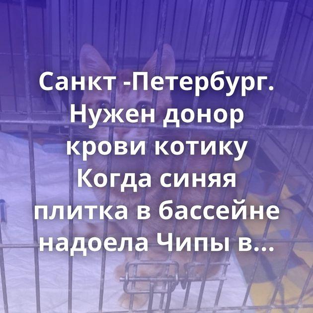 Санкт -Петербург. Нужен донор крови котику Когда синяя плитка в бассейне надоела Чипы в прививке? Не…