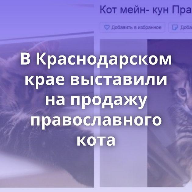 ВКраснодарском крае выставили напродажу православного кота