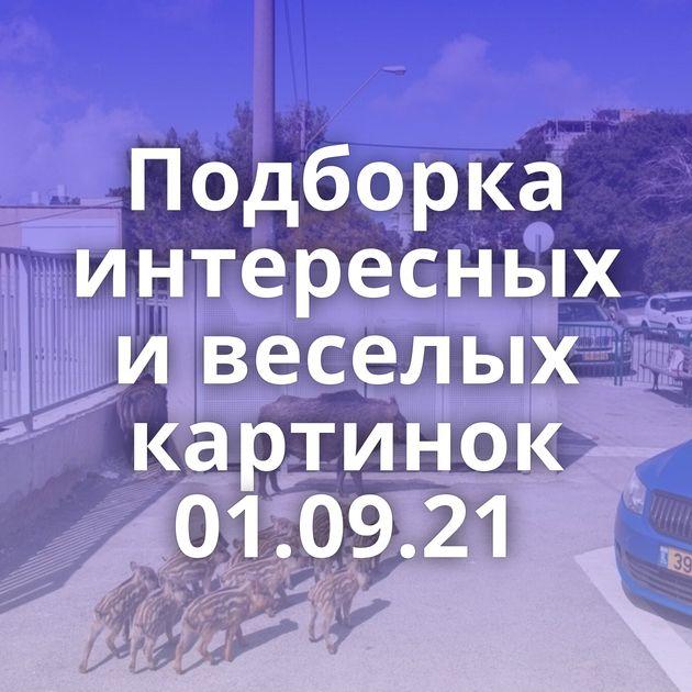 Подборка интересных и веселых картинок 01.09.21
