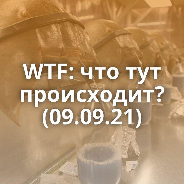 WTF: что тут происходит? (09.09.21)