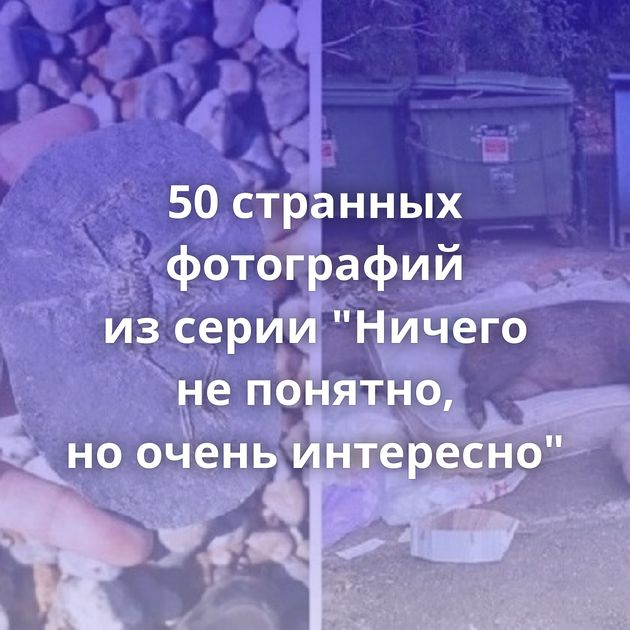 50странных фотографий изсерии