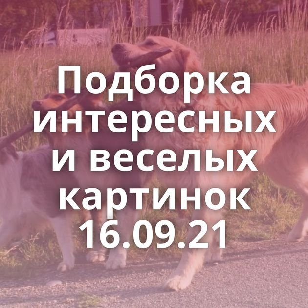 Подборка интересных и веселых картинок 16.09.21