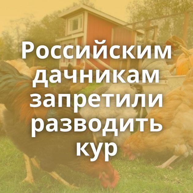 Российским дачникам запретили разводить кур