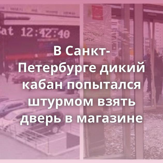 ВСанкт-Петербурге дикий кабан попытался штурмом взять дверь вмагазине
