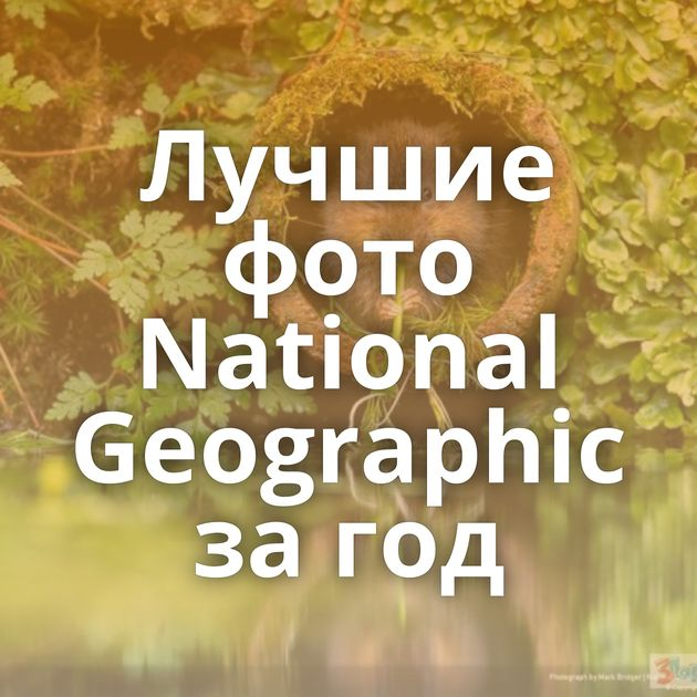 Лучшие фото National Geographic за год