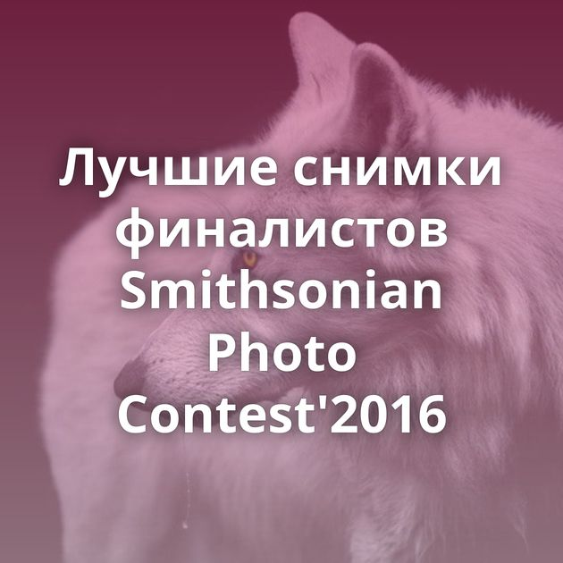 Лучшие снимки финалистов Smithsonian Photo Contest'2016