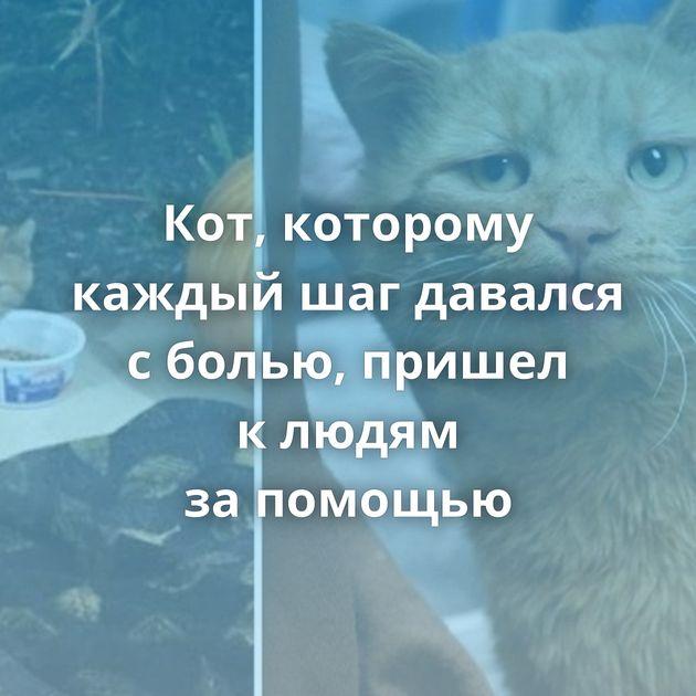 Кот, которому каждый шагдавался сболью, пришел клюдям запомощью