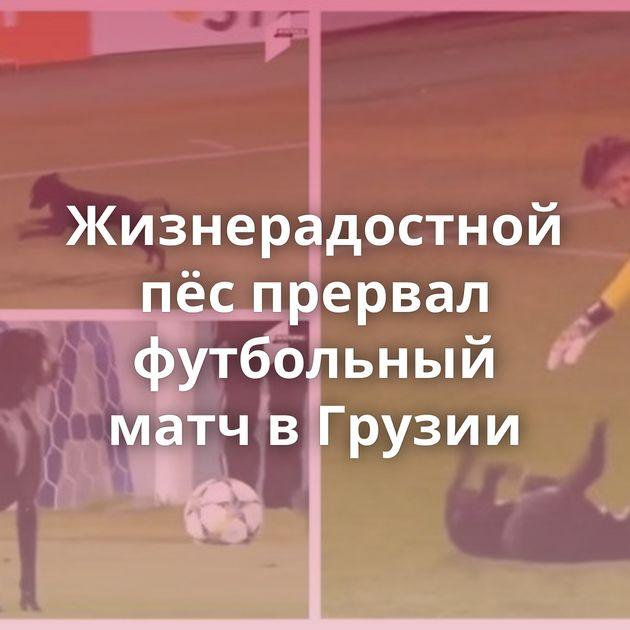 Жизнерадостной пёспрервал футбольный матч вГрузии