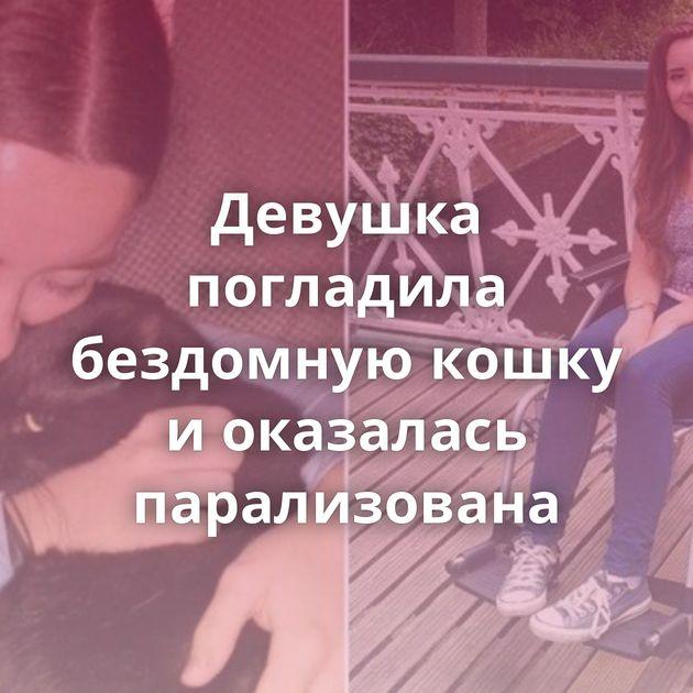Девушка погладила бездомную кошку иоказалась парализована