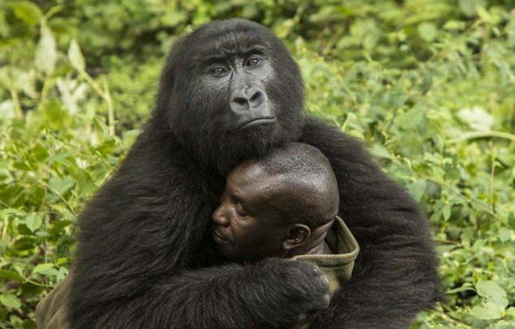 Секс горил смотреть онлаин