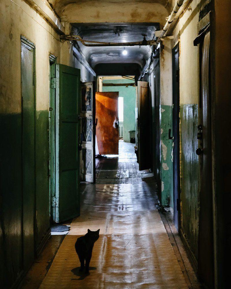 связан старые московские коммуналки фото собаки только