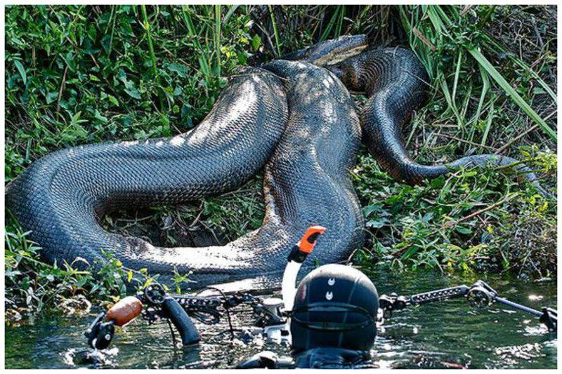 отдельно в сонах увидищ чорную змея популярные