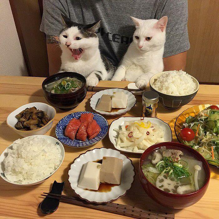 Обед картинка смешная