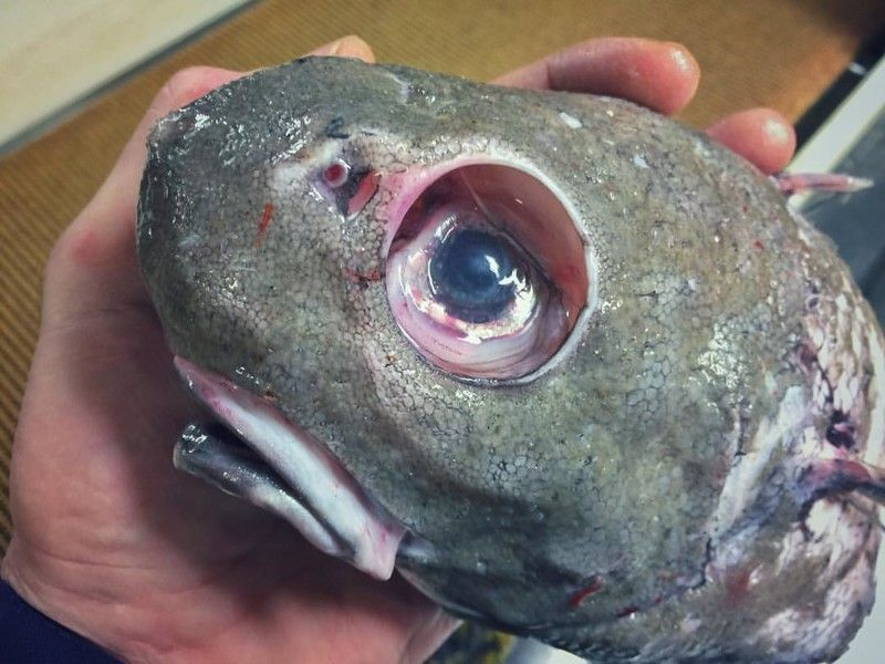 Монстр рыба во сне