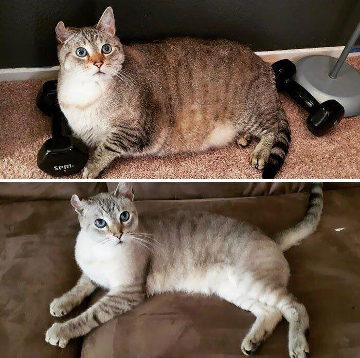 Как похудеть коту тому в игре